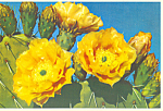 Click here to enlarge image and see more about item cs4295: Prickly Pear Cactus Postcard cs4295