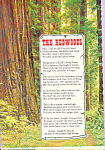 California Redwoods Words by Joseph B. Strauss
