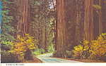 Avenue of Giants Parkway California cs4350