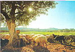 Click here to enlarge image and see more about item cs4445: The Shepherd with his Flock at Shepherd s Field Israel cs4445