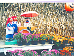Click here to enlarge image and see more about item cs4532: Potted Mums at Flower Stand