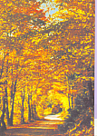 Autumn Woodland Country Road Scene Postcard cs4577