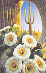 Click here to enlarge image and see more about item cs4615: Saguaro Cactus Saguaro National Monument AZ   cs4615