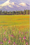 Mountains and Wildflowers Postcard cs4680