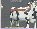 Click here to enlarge image and see more about item cs4703: Coffin Shaped Like A Bull Postcard cs4703