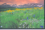 Click here to enlarge image and see more about item cs4740: Wildflowers in Big Sky Country