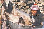 Click here to enlarge image and see more about item cs4745: Goat in Washtub