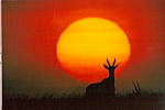 Click here to enlarge image and see more about item cs4747: Sunrise, Masai Mara National Game Preserve