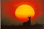 Click here to enlarge image and see more about item cs4747: Sunrise Masai Mara National Game Preserve Kenya cs4747
