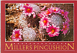 Click here to enlarge image and see more about item cs4762: Millers Pincushion in Bloom Postcard cs4762