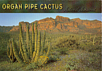 Click here to enlarge image and see more about item cs4768: Organ Pipe Cactus