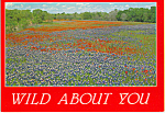 Click here to enlarge image and see more about item cs4877: Bluebonnets and Indian Paintbrush, Texas