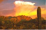 Click here to enlarge image and see more about item cs4895: Storm over Ajo Mountains , Arizona