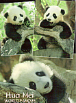 Click here to enlarge image and see more about item cs5115: Baby Panda, San Diego Zoo