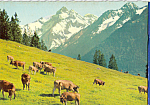 Click here to enlarge image and see more about item cs5119: Bergkuhe Cows im Allgau Germany Postcard cs5119