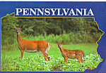 Pennsylvania Whitetails