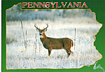 Pennsylvania Whitetail Postcard cs5122