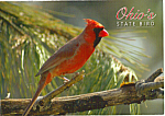 Click here to enlarge image and see more about item cs5131: Cardinal State Bird of Ohio cs5131