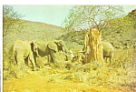 Click here to enlarge image and see more about item cs5134: Elephant Boabab Postcard cs5134