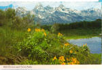 Wild Flowers and Teton Peaks,Wyoming