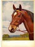Click here to enlarge image and see more about item cs5672: Hermann Gemeinhardt vor dem Austritt Horse ostcard cs5672