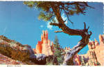 Click here to enlarge image and see more about item cs5704: Queen's Garden, Bryce National Park