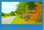 Click here to enlarge image and see more about item cs6243: Flame Azalea on Blue Ridge Parkway
