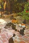 Click here to enlarge image and see more about item cs6365: Cats on Hemingway House Patio, Key West Florida