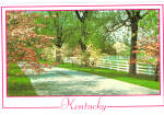 Springtime in Kentucky Postcard cs6386