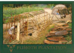 Click here to enlarge image and see more about item cs6413: Plimoth Plantation Plymouth Massachusetts cs6413