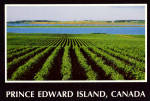 Click here to enlarge image and see more about item cs6441: Potato Fields,  Charlottetown,Prince Edward Island