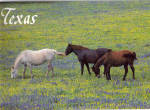 Click here to enlarge image and see more about item cs6532: Horses andTexas Bluebonnets