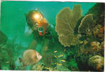 Click here to enlarge image and see more about item cs6593: Seascapes of Belize Grey Angelfish Postcard cs6593