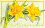 Click here to enlarge image and see more about item cs6594: Great Yellow Daffodils Postcard cs6594