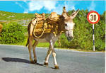 Click here to enlarge image and see more about item cs6675: Donkey Walking Along a Road Postcard cs6675