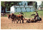 Amish Man and Sons Planting Tobacco Postcard cs6735
