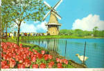 Windmill and Tulips in Holland Michagan