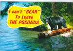 Black Bear in the Poconos Postcard cs6777
