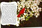 Click here to enlarge image and see more about item cs6832: Legend of the Dogwood,with a Cardinal