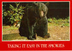 Native Black Bear Great Smoky National Park Postcard cs6837