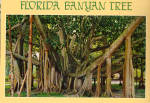 Florida Banyan Tree Postcard cs6844