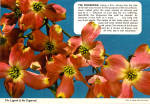 Click here to enlarge image and see more about item cs6864: Legend of the Dogwood
