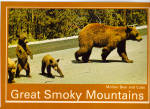 Mother Bear and Cubs Great Smoky Mountains Postcard cs6865