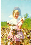 Cotton White Gold of Dixie Postcard cs6884