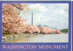 Click here to enlarge image and see more about item cs6900: Washington Monument Cherry Blossoms Washington DC  cs6900