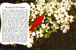 Click here to enlarge image and see more about item cs6921: Legend of the Dogwood and Cardinal