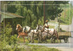Amish Horse Drawn Farm Wagon Postcard cs6928