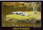 Click here to enlarge image and see more about item cs6931: Oscar, Oldest Alligator at Okefenokee Swamp Park