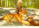 Click here to enlarge image and see more about item cs6945: World Famous Tiglon at Jungle Larrys Safari Park