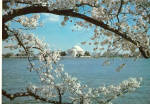 Jefferson Memorial Cherry Blossom Time